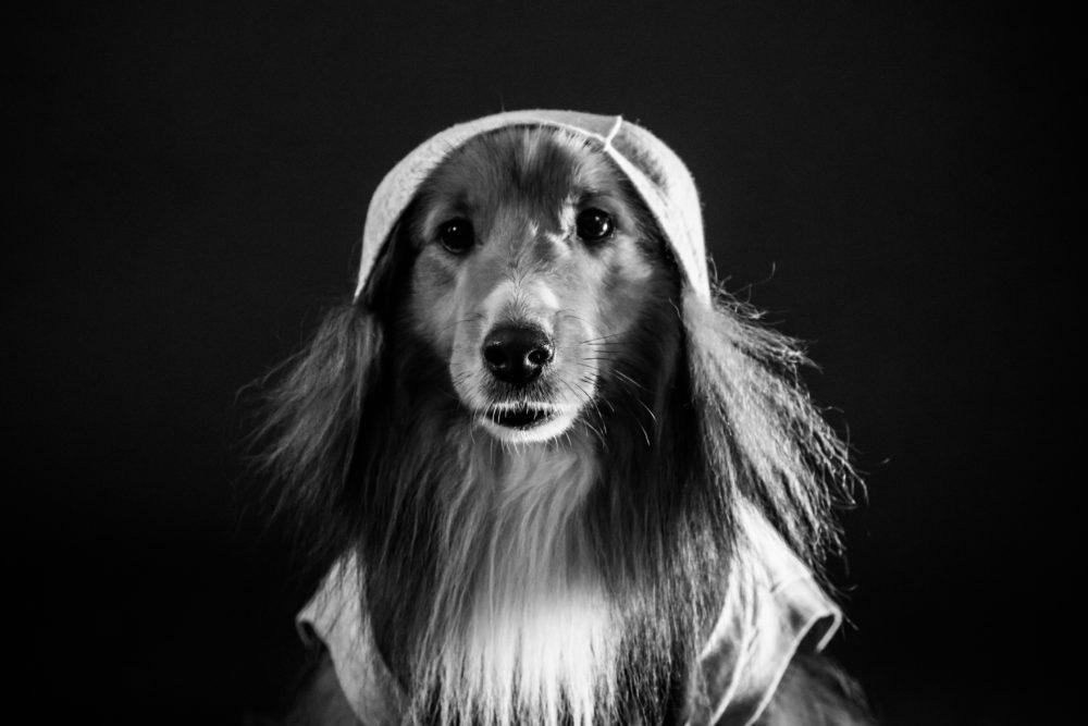 Seppo-koira