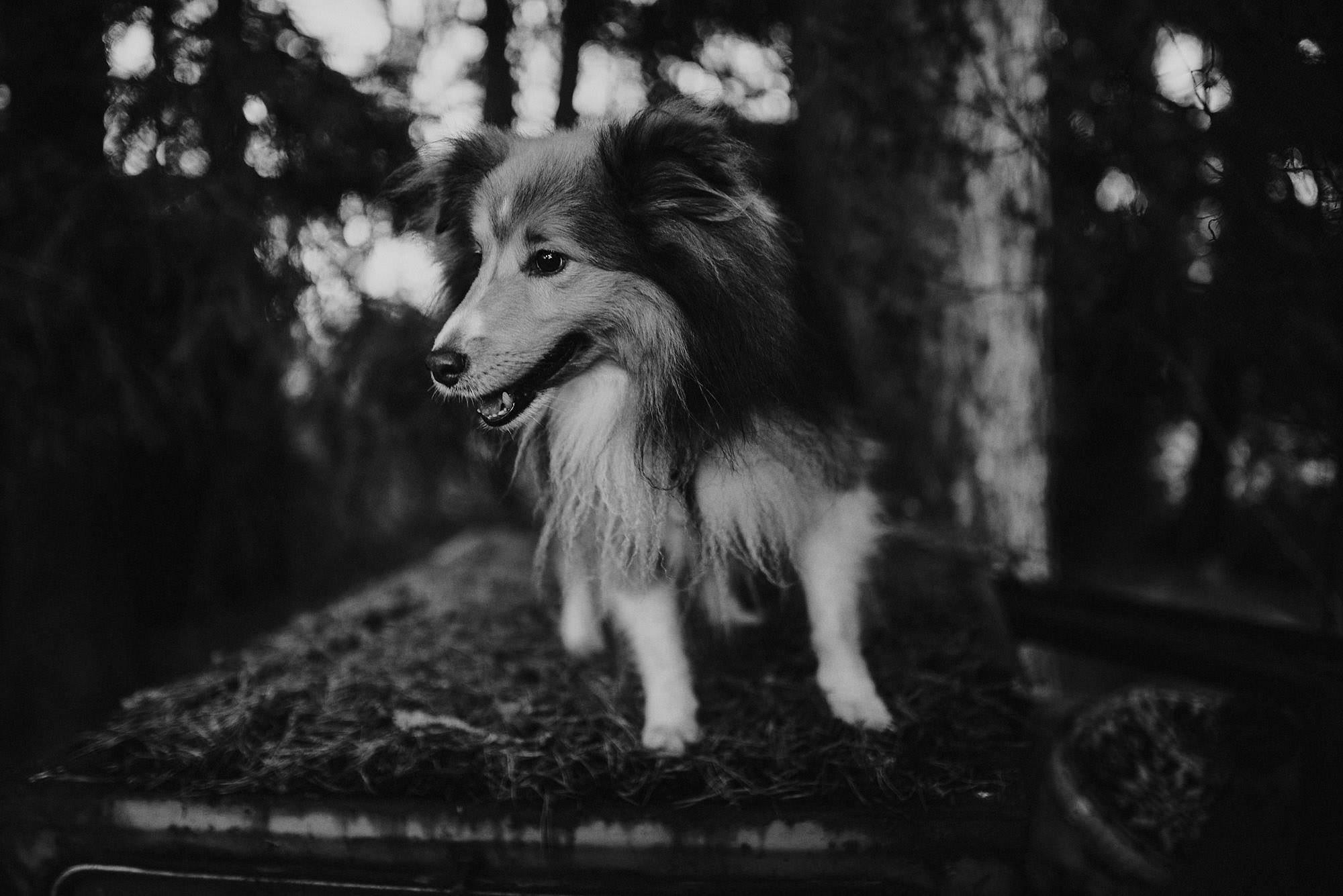 seppo koira viestintäliiga